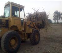 «من تكسير القصب للعصر» بوابة أخبار اليوم ترصد مراحل تصنيع العسل الأسود