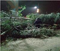 الإنقاذ البري يتدخل.. قطع طريق «قنا - دشنا» الزراعي بسبب سقوط شجرة كبيرة