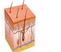 موافي : الجلد هو العضو المنوط بالإحساس في جسم الإنسان