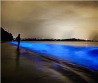 صور مذهلة لكائنات ذاتية الإضاءة بشواطئ «الذهب الأزرق»