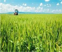 «الزراعة» تشدد على منع التعديات.. واستمرار العمل خلال إجازة العيد