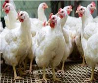 ننشر أسعار الدواجن في الأسواق خلال وقفة عيد الفطر المبارك