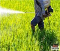 «الزراعة»: المبيدات متهم برئ من تلوث الأغذية والبطيخ آمن