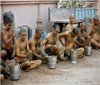 الهند تستخدم فضلات البقر في الوقاية والعلاج من كورونا