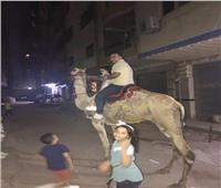 بسبب إجراءات كورونا والإغلاق.. جمل في شوارع المعادي لإسعاد الأطفال