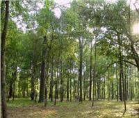 الغابات الشجرية.. خير جديد ينمو على أرض مصر