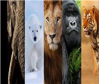دراسة تكشف عن «الخمسة الكبار» في المملكة الحيوانية