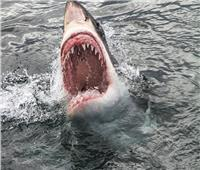 مصرع رجل بعد هجوم لسمكة قرش في نهر سوان بـأستراليا