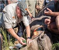 روساتوم: استخدام العلوم النووية لحماية وحيد القرن الأفريقي من الإنقراض  صور