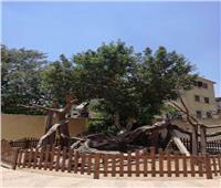 خاص   الانتهاء من تطوير شجرة مريم العذراء في المطرية بنسبة 80%