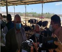 يستوعب ٨ الاف رأس .. مشروع لإنتاج الألبان وتربية الماشية ببورسعيد