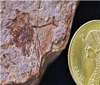 اكتشاف مذهل.. العثور على حفريات عمرها ٥٦ مليون سنة بالصحراء الغربية  صور