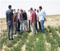 محافظ الوادي الجديد يتفقد المشروع الزراعي لإنتاج النباتات الطبية بالفرافرة