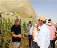 محافظ الوادي الجديد يستجيب لمطلب أحد الشباب بمشروع الصوب الزراعية