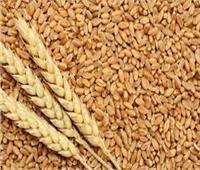 التموين تواصل استلام القمح المحلي حتى منتصف يوليو