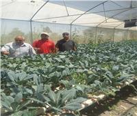 الإرشاد الزراعي ينظم ندوات ولقاءات توعية لمزارعى المنيا والإسكندرية