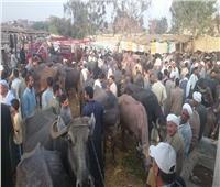 «التأمين على الثروة الحيوانية» يطلق قوافل إرشادية بأسواق الماشية