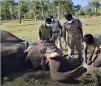 فحوصات كورونا للفيلة بالهند | فيديو
