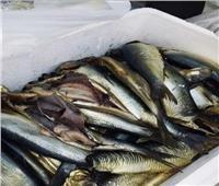 ضبط 54 طن دقيق مدعم ولحوم وأسماك منتهية الصلاحية بالإسماعيلية