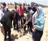 نائب المحافظ تتفقد قرية كفر حلاوة بمركز أطفيح.. وزراعة 1100شجرة مثمرة