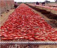 «الزراعة» تحقق في فيديو إلقاء محصول الطماطم بأحد المصارف