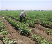 الارشاد الزراعي : ندوات ولقاءات توعية لمزارعي 4 محافظات