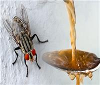 نصائح منزلية| حيل للتخلص من الذباب في المنزل بوسائل طبيعية