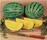 8 فوائد مذهلة لـ«البطيخ الأصفر».. أبرزها تحسين صحة العين والقلب