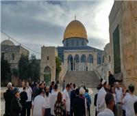 80 مستوطنا إسرائيليا يقتحمون المسجد الأقصى