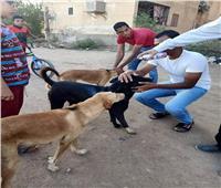 «طب بيطري أسوان» تطلق حملة «تطعيم وتعقيم كلاب الشوارع»