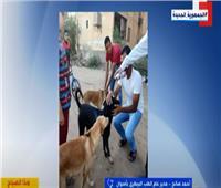 انطلاق أول حملة لتطعيم كلاب الشوارع بأسوان  فيديو