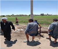 زراعة ١٢ عمود لإنارة طريق مدافن القري و رفع ٢٥ طن مخلفات بالمنيا