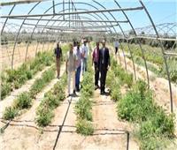 رئيس جامعة العريش: المشروعات التعليمية والإنتاجية تخدم أبناء سيناء