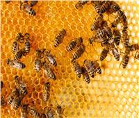 «صمغ النحل» كنز جمالي للبشرة والشعر