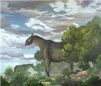 اكتشاف حفريات لـ«وحيد القرن» عمرها 26 مليون سنة