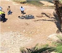 انتشال جثة سيدة من النيل مفصولة الرأس بأسيوط