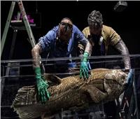 العثور على سمكة غامضة تعيش 100 عام وتحمل 5 سنوات | صور