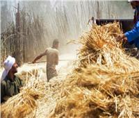 «الجريدة الرسمية» تنشر قرار يضم 3 وزارات لتسليم وتخزين محصول القمح