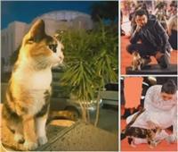 مجدي صابر: تحقيق موسع في تسمم «قطة» دار الأوبرا |فيديو