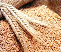«التموين»: توريد 3.427 مليون طن قمح.. وسداد 16 مليار جنيه للمزارعين