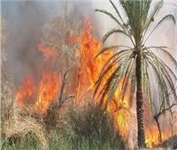«عقب سيجارة» يتسبب في حريق 15 نخلة ومخلفات زراعية بقنا