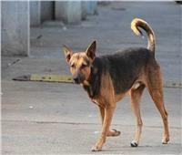 إصابة 11 شخصًا هاجمهم كلب مسعور بنجع حمادي