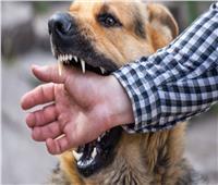 بينهم 7 أطفال.. ننشر أسماء مصابي الكلب المسعور في «قنا»
