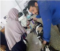 الزراعةترصد الأنشطة التدريبية لمعهد التناسليات الحيوانية خلال شهر يونيو  صور