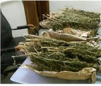 ضبط كمية من «البانجو» و4 أسلحة نارية بحوزة 6 متهمين في أسوان