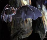 الهند.. اكتشاف أحد أخطر الفيروسات فى الخفافيش
