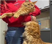 صور| طييبة روسية بالغردقة تعلن عن مكافأة كبيرة لمن يعثر على قطها الغريب