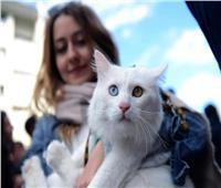 خبراء يحثون أصحاب الحيوانات الأليفة على تجنبها إذا كانو مصابين بـ«كوفيد19»