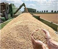 انتهاء موسم توريد القمح مبكرًاباستثناء 8 محافظات