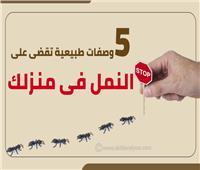 إنفوجراف | 5 وصفات طبيعية تقضي على النمل في منزلك